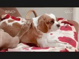 hundebabys chaos auf vier pfoten